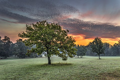 Tree at Sunrise (Petr Burkyt) Tags: tree surise sun golden hour trees canon sigma art 35mm 6d color
