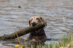 Tiere_Hunde_16042015_Sky und Sarah_023 (rincewind1111) Tags: hunde kochelsee skyundsarah tiere dog dogs hund