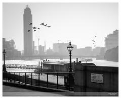 Albert Embankment (Nathan Dodsworth Photography) Tags: london capitalcity riverthames birds monochrome moody atmospheric outdoors light shadow lamp embankment princealbert architecture silhouettes