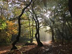 Shafts of light (Linda Cronin) Tags: trees autumn wood woods farningham kent sunlight leaves black green brown orange farninghamwood lindacronin explore