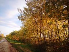 Autumn (andreakoi) Tags: nice colorful color love iphone5 iphonephotography iphone beautiful yellow ilovenature nature fall autumn