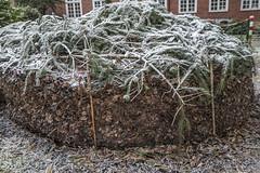 Erster Frost - 0012_Web (berni.radke) Tags: ersterfrost frost raureif wassertropfen rime eisblumen eiskristalle iceflowers icecrystals escarcha