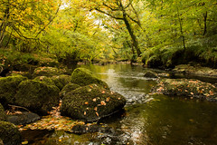 Downstream (Keith in Exeter) Tags: downstream river teign stream woods woodland rocks leaves water autumn fall moss dartmoor nationalpark devon england uk outdoor landscape