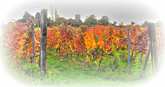 Vine to Chalice... (Andy Gant) Tags: colours colour color colors vineyard vine red orange yellow green essex purleigh newhall england uk textures texture wine grapevine church countyofessex maldon hss sliderssunday villages village
