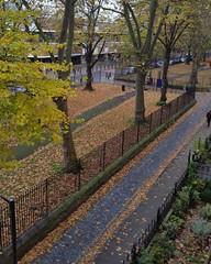 Stepney Green London E1  in Autumn 2016 (Carol B London) Tags: stepneygreen london e1 stepney eastend leaf leaves fall autumn 2016