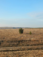 Millerovo-vertical (Horosho.Gromko.) Tags: field autumn nature tree fall grass rostovregion russia