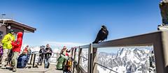 Unexpected guest (Yan Shun) Tags: tmb aiguille du midi mont blanc mountain bird people sky blue snow