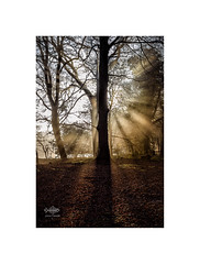 Blinded by the Light (silver/halide) Tags: backlight trees autumn rays sunlight shadow shafts leaves silhouette woods forrest scorrier cornwall johnbaker d750 niftyfifty 50mm18g