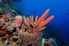 Reef_Bonaire_November 2016 C (R13X) Tags: bonaire bonairediveandadventure underwaterphotography shorediving wideanglephotography reef coral sponge