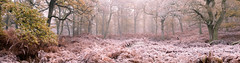 Lost (Tom_Drysdale) Tags: wood freezing november winter mist frost autumn fog 2016 birnam murthly ice