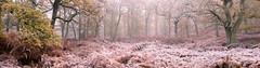 Lost (Tom_Drysdale) Tags: wood freezing november winter mist frost autumn fog 2016 birnam murthly ice