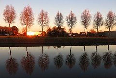 Reflecting (Gert Vanhaecht) Tags: waterreflections gertvanhaecht trees reflections vaartmechelenleuven sunset hever vaart vaartleuvenmechelen waterreflection availablelight canonpowershotsx700hs color orange tree vaartleuvendijle water composition colour canon landscape light sun reflection