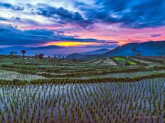 garut (sandilesmana28) Tags: rice farm sunrise slow speed cloud water tree nature garut west java