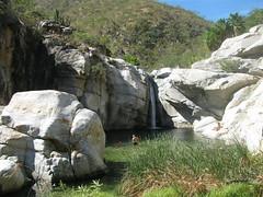 Fox Canyon aka Zorro Canyon (jm94121) Tags: cabosanlucas bajacaliforniasur foxcanyon zorrocanyon santiago waterfall