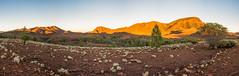 South Australian outback (PiotrHalka) Tags: brachinagorge southaustralia camping sunrise sunset flindersranges australia nikon wildlife kangaroo emu