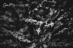 Let it snow. (Caitlin McEvoy) Tags: nightphotography canon550d canon streetphotography nottingham christmas christmasmarket blackandwhite monochrome
