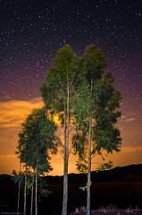 Dark mood (rod_b_k) Tags: ifttt 500px potolo chuquisaca encuentro fotografos night trees clouds sky starry stars cloudscape eucalyptus