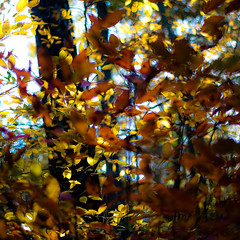 Autumn Afternoon In Woods 026 (noahbw) Tags: captaindanielwrightwoods d5000 dof nikon abstract autumn blur depthoffield forest leaves light natural noahbw shadow square trees woods