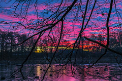 Colors in the Sky (Renate Bomm) Tags: 366 2016 kln renatebomm sonnenuntergang sunrise blue atardecer tree baum water see wasser walking canoneos6d ef50mmf14 colorsinthesky ngc flickrunitedaward