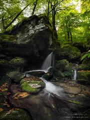 Apuntando a las Alturas (diegogm.es) Tags: olympus omd em1mkii em1 em1markii asturias bosque forest españa panoramica otoño autumn naturaleza mzuiko