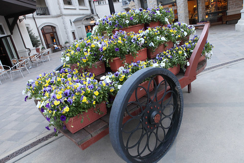 Flower Cart in Vail