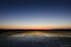 alba sulle risaie (Giussani Federico) Tags: alba sunsets toscana grosseto maremma risaia principina