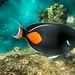 tidal pool (nosha) Tags: ocean sea orange usa fish green beautiful beauty rock hawaii oahu snorkeling northshore reef sharkscove feef