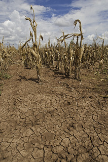 From http://www.flickr.com/photos/41284017@N08/9679054379/: It's called a drought.  Get used to it...