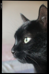 IMG_0164 (anto-logic) Tags: cats amici gatti animali