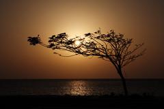 Sunset (Benny2006) Tags: sunset sea sky sun reflection tree water coast redsea