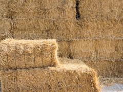 Granja el Bucarito, Rota. (miguelno) Tags: farm straw olympus cadiz cdiz zuiko oat stroh omd granja rota 1250mm em5 bucarito mzuiko