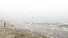 Foggy beach (piropiro3) Tags: ocean sea beach water misty fog strand photoshop island meer wasser nebel gull gulls foggy insel shore ufer mwe mwen usedom ozean karlshagen neblig