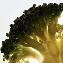 Broccoli (Little Trees) (S Cansfield) Tags: abstract macro green nikon d70s broccoli vegetable 40mm