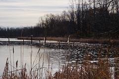 Ann Lee Pond (#2) (fotofish64) Tags: autumn newyork 20d water landscape pond colonie annlee greenscene annleepond