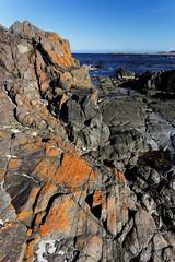 20131117-79-Orange lichen on rocks at Lisdillon Beach.jpg (Roger T Wong) Tags: ocean sea beach water australia tasmania canonef1740mmf4lusm eastcoast canon1740f4l canoneos6d littleswanport lisdillonbeach