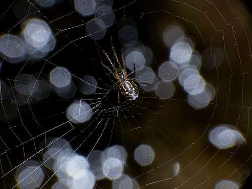 Spiderweb bokeh