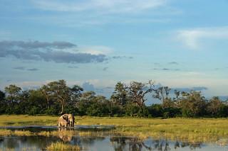 Botswana Okavango Delta Photo Safari 67