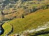 au dessus de MUNSTER  84  les VOSGES,  Beaute et Paysages de notre belle France, Guy Peinturier (GUY PEINTURIER) Tags: vairessurmarne beautedefrance guypeinturier bellefrance paysagesdefrance peinturierguy