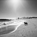black dog, liquid metal (nosha) Tags: usa beach beautiful beauty newjersey nj og oceangrove