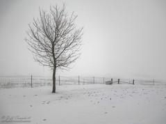 The End (TripCyclone) Tags: winter snow tree leaves fog farm theend farmland missouri doghouse hdr hoohaa52 hh52y352