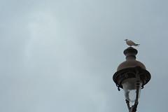 A Bird on an Outdoor Lamp (Shinichiro Hamazaki) Tags: bird  outdoorlamp outdoorlight