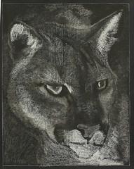 Puma (ArneKaiser) Tags: chalk edited waldorf puma chalkboard panther cougar chalkart mountainlion 4thgrade chalkdrawings manandanimal autoimport boarddrawings blackboarddrawing pineforestschool mrkaisersclass howtodrawa