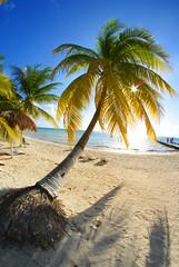 Paradise (jpetralia) Tags: blue sea sky sun tree beach gulfofmexico relax mexico coast sand perfect paradise gulf sony playadelcarmen palm palmtree shade coastline cancun caribbean 300 alpha relaxation mx perfection islamujeres caribbeansea a300 cancunmexico a cancunmx sonya300 sonyalpha300 alpha300