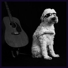 singin' the blues (Eric.Ray) Tags: daily dog challenge canon eosm blues harmonica guitar cool musician sunglasses sitting