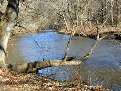Rock Creek (presbi) Tags: park usa creek washington stream rockcreekpark rockcreek torrente mygearandme mygearandmepremium infinitexposure