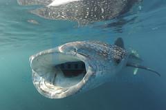 2012 11 DUNE DJIBOUTI DSC_2160
