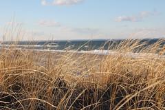 Sandy Neck Beach, Sandwich (Massachusetts Office of Travel & Tourism) Tags: ocean beach capecod massachusetts sandwich coastal sandyneckbeach