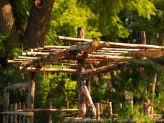 Natural Arborvitae Wood Arbor & Trellis by Switzer's Nursery & Landscaping ~ Northfield, Minnesota – The Art of Landscape Design (Switzer's Nursery & Landscaping) Tags: minnesota landscape design natural landscaping glenn arbor cedar handcrafted northfield pergola switzers arbour switzer landscapedesign designbuild hardscape hardscaping landscapedesigner customdesigned glennswitzer mnla apld switzersnursery landscapedesigns pergoladesigns theartoflandscapedesign switzersnurserylandscaping arbourdesigns artoflandscapedesign arbordesigns minnesotanurserylandscapeassociation assoicationofprofessionallandscapedesigners naturalarborvitaewoodarbortrellisbyswitzer'snurserylandscaping~northfieldminnesota–theartoflandscapedesign
