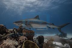 2014 03 TIGER BEACH-2743