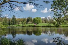 Morton Arb 22 (Jan Crites) Tags: park trees lake reflection nature illinois spring nikon natural arboretum lisle mortonarboretum redbudtrees d600 lakemarmo jancritesphotography
